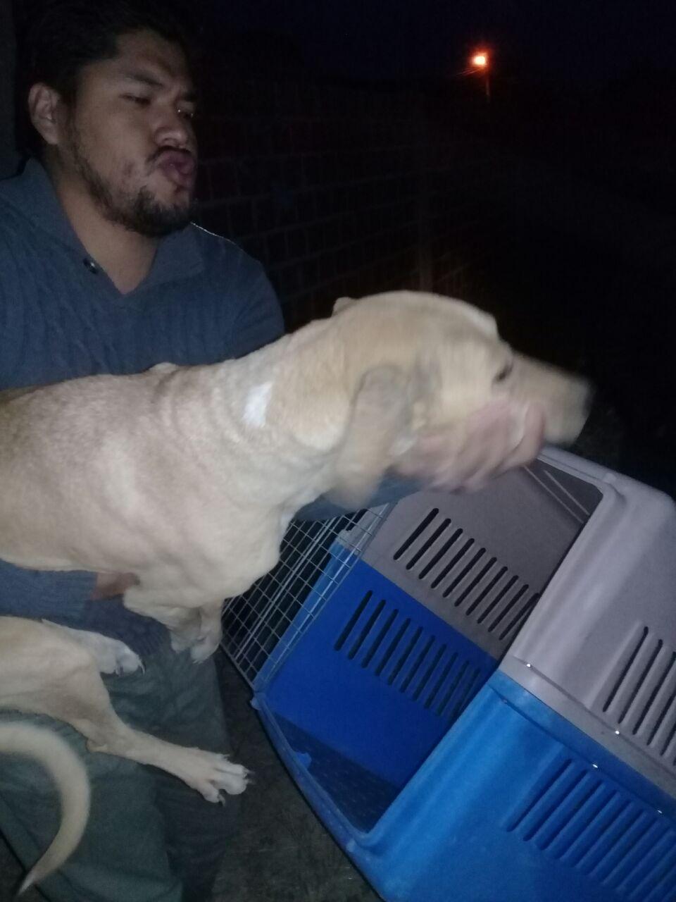 Rescatan 10 perros abandonados de un lote en el barrio Morros Blancos