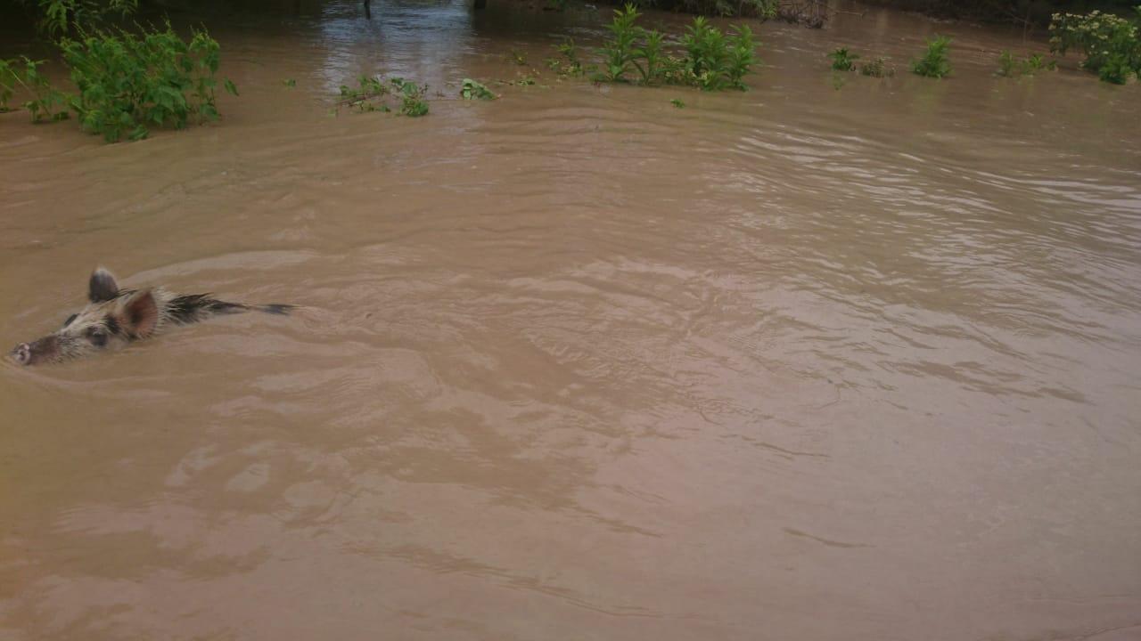 Evacuan a familias de comunidades de Villamontes por desborde del Pilcomayo