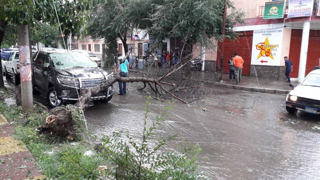 "Municipio dice que poda los  árboles peligrosos ""a pedido"""