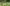 Destruyen 3,5 toneladas de plantas de yerba