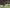 Wilstermann juega su última chance en la Libertadores