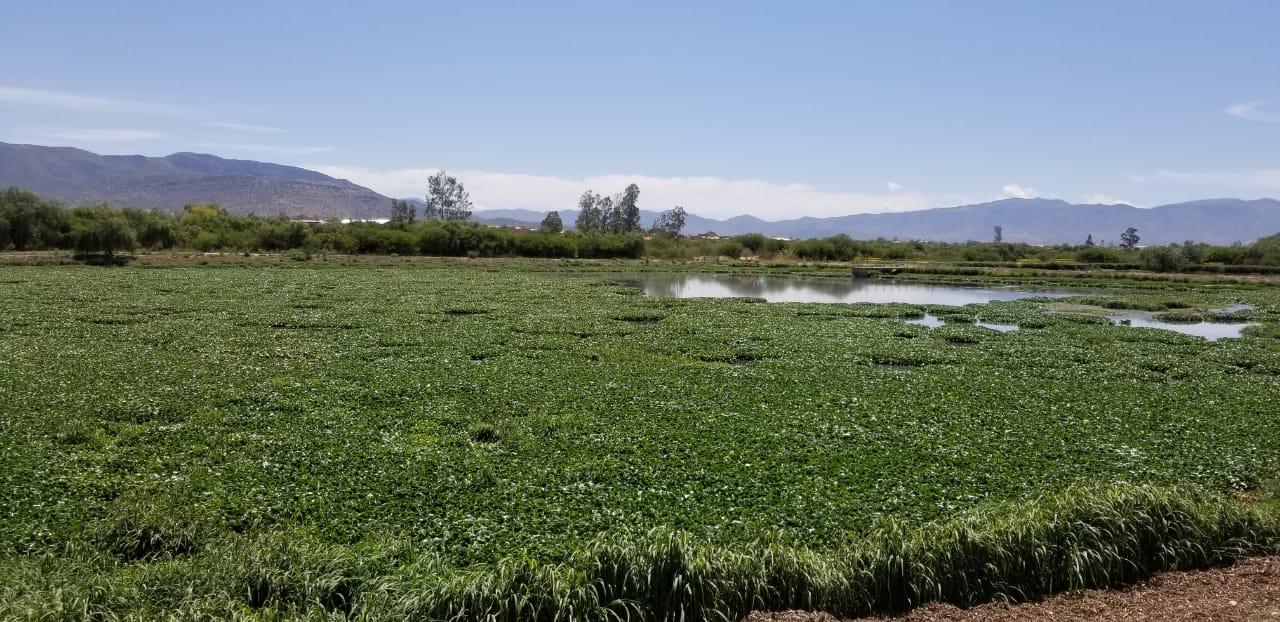 Arrancó segunda fase del proyecto para mitigar olores en San Luis