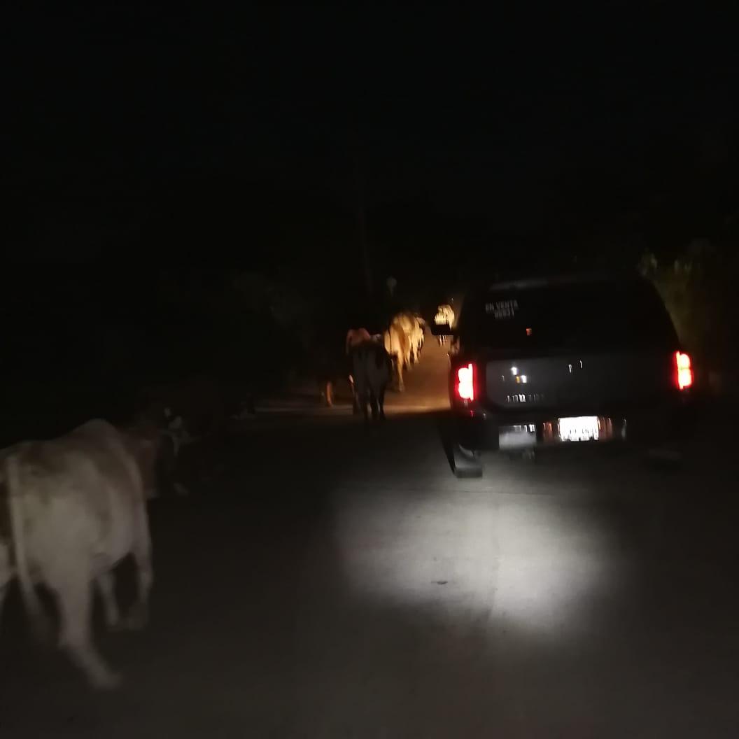 Transportistas exigen tratamiento de ley para prohibir presencia de animales en carreteras