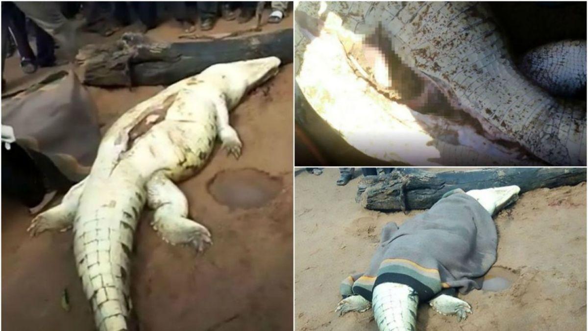 Un cocodrilo se traga a un niño de 8 años, los vecinos matan al reptil y